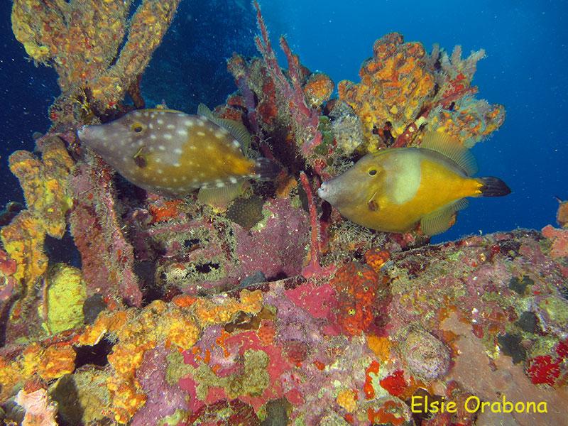 Barbados – Um mergulho surpreendente no Caribe