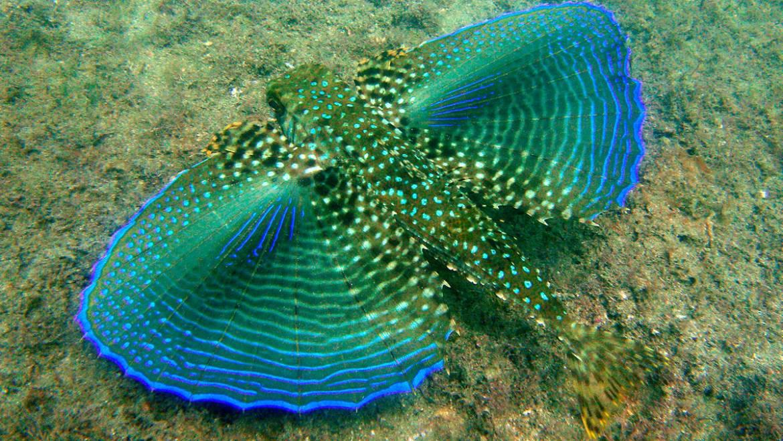 O que é comum vermos nos mergulhos em Ubatuba.